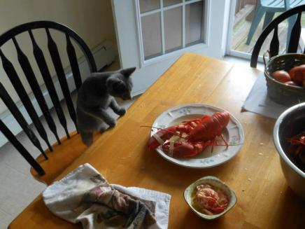stan&lobster