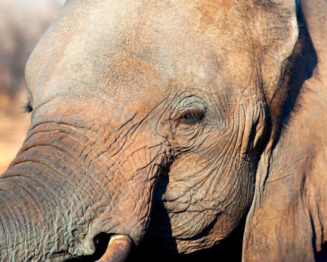 elephant-1246278_960_720